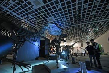 探検気分が味わえる「青森大恐竜展」のナイトミュージアム=今月18日