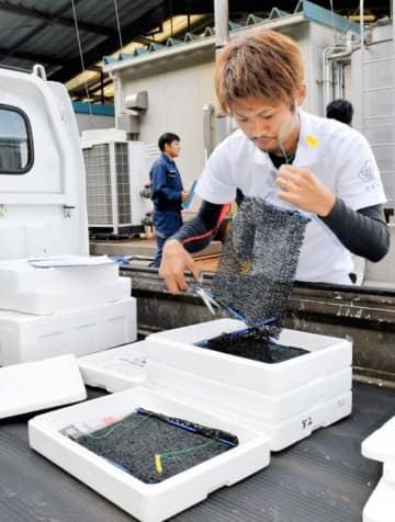 県水産研究センターから受け取った稚貝のネットを業者ごとに振り分ける漁協関係者=30日午後、宇和島市下波