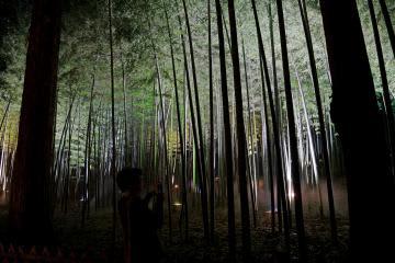音楽が流れ、ミストが立ちこめる神秘的なライトアップで照らされた偕楽園の孟宗竹林=30日、水戸市常磐町、吉田雅宏撮影