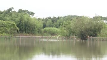 トキの個体群再建 浙江省の科学力で繁殖率が上昇