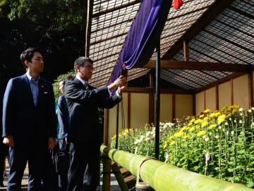 新宿御苑で開催されている菊花壇展を鑑賞する小泉環境相(左)とスマートフォンで撮影する河野防衛相=2日午後、東京都