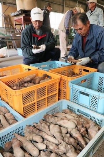 形や重さごとに銀沫を仕分ける生産者たち=10月30日、真庭市勝山