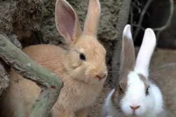 ウサギの生態に異変が