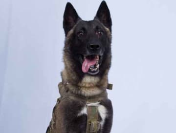Dog Who Assisted In Raid That Ended In Death Of ISIS Leader Abu Bakr Al-Baghdadi Raid Returns To Duty