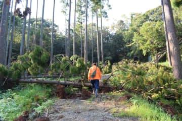 国指定の史跡の長柄横穴群では、相次ぐ災害による倒木で見学路がふさがれた=1日午後1時25分ごろ、長柄町徳増