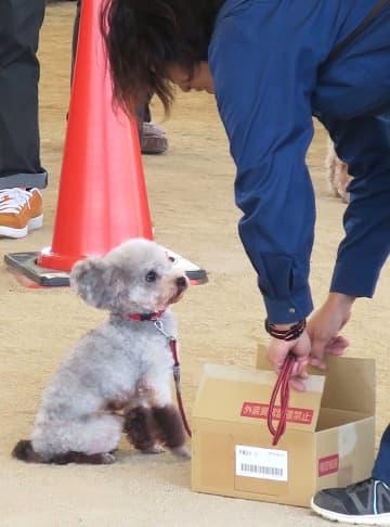 爆発物の入っている箱を探し当て得意そうな警察犬(京都府京丹波町曽根・道の駅「京丹波 味夢の里」)
