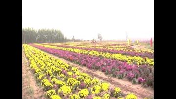 農家を笑顔にする満開の花畑