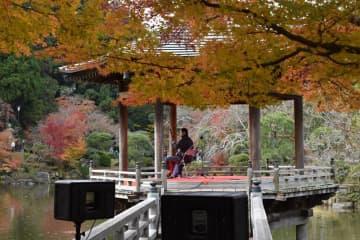 二胡の音色と紅葉満喫 成田山公園でイベント 9日から