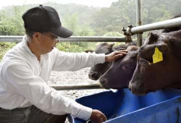 那珂川に流された牛をなでる和牛繁殖農家の瀬尾亮さん=10月、栃木県茂木町