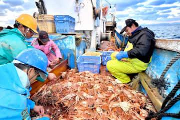 越前がに漁が解禁となり、船上でタグ付けする漁師たち=11月6日、福井県の越前町沖