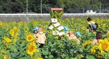 見頃となった約1万本のヒマワリ。中央にはひまわりタワーも設置された=6日、熊本市西区