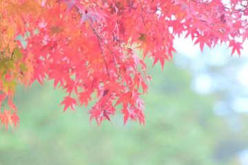 秋のドライブで立ち寄りたい、道の駅「山北」秋の収穫祭!新鮮農産物や加工品など多数販売
