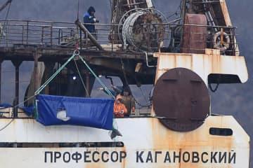 8日、日本海に放たれる「イルカ監獄」のシロイルカ(タス=共同)