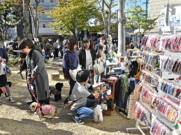 多くの愛犬家と犬でにぎわう会場=多治見市豊岡町、ヤマカまなびパーク
