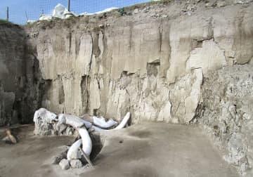 発掘されたマンモスの骨=メキシコ市北方のトゥルテペック(メキシコ国立人類学歴史研究所提供・共同)