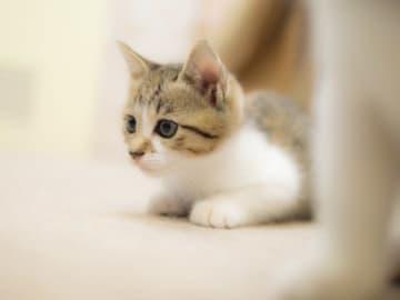 猫を家に迎える時は相性で決めることをおすすめします(ひじり/stock.adobe.com)