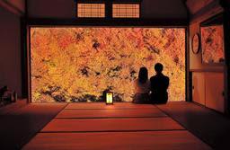 ライトアップされ、鮮やかな色が夕闇に浮かぶドウダンツツジ=安国寺