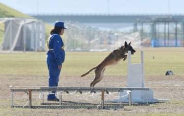 指導者の指示で柵を跳び越える県警嘱託犬