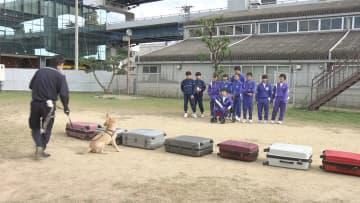 麻薬探知犬の訓練を体験する中学生たち