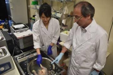 タイからの留学生(左)に鶏肉の消毒技術を説明する三澤尚明教授=宮崎市・宮崎大