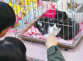 猫の引き取り手を募った譲渡会