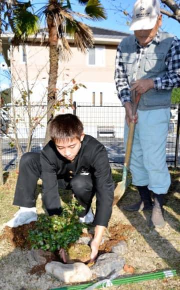 トキワバイカツツジの苗木を植える津島中生