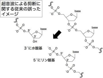従来考えられてきたDNA切断時の末端形状(写真:東北大の発表資料より)