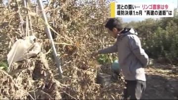 """泥との闘い・・・リンゴ農家は今 堤防決壊1ヵ月 """"再建の道筋""""は 長野"""