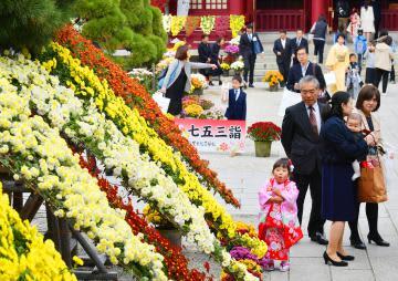 見頃を迎えたキクの花と七五三参りの晴れ着で華やいだ境内=13日午前、笠間稲荷神社