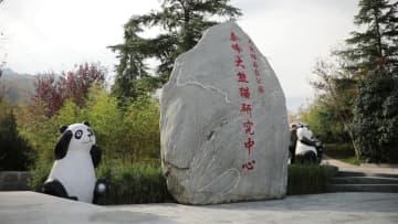 パンダの赤ちゃん、生後100日祝いに登場 陝西省西安市