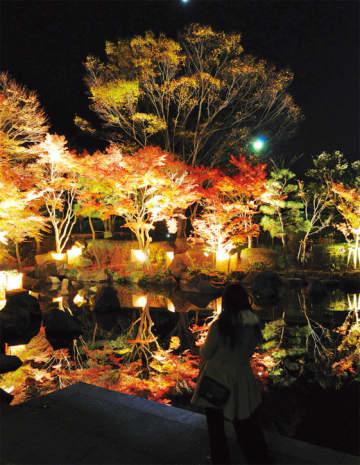 大磯城山公園で11月22日(金)からもみじがライトアップ【大磯町】