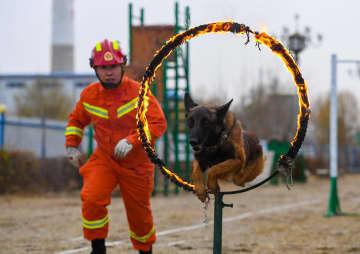 災害救助犬、救援活動で大きな力に 内モンゴル自治区包頭市