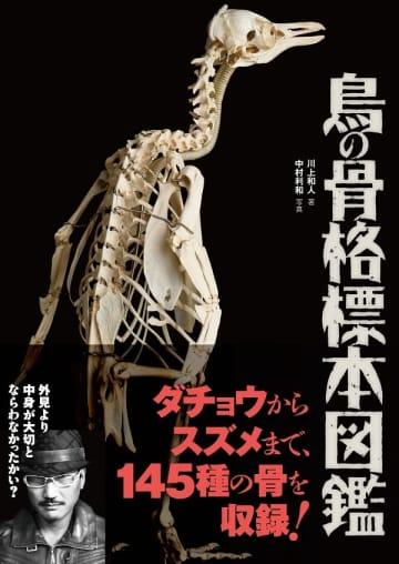写真は『BIRDER SPECIAL 鳥の骨格標本図鑑』(文一総合出版)