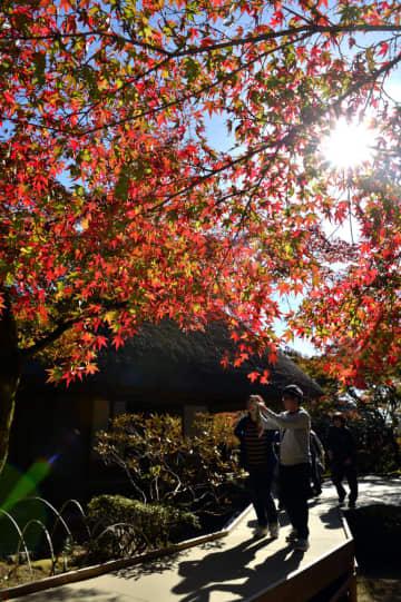深まる秋に酔いしれ 名勝「九年庵」一般公開 23日まで、神埼市