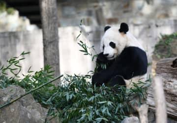 パンダの「貝貝」、中国へ 米国立動物園で見送りイベント始動