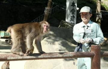 サルの調査をする大分市教委文化財課の栗田博之さん=高崎山自然動物園