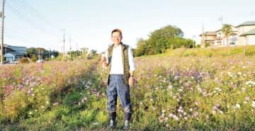 コスモス、ときがわの花畑に2万株 台風の影響で横倒しも起き上がる 「ご自由に」とはさみ、花束作る人も
