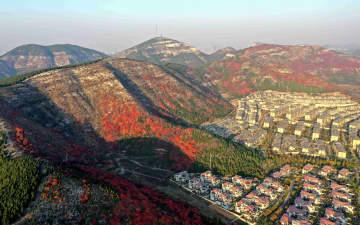 カラフルできれい!鮮やかに染まる初冬の風景 山東省済南市