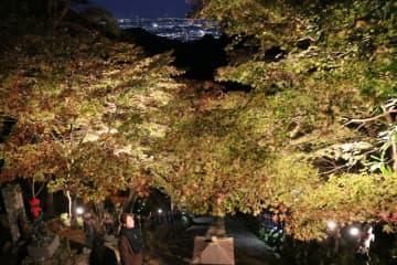 遠くに夜景を見ながら、ライトアップされた紅葉を楽しめる =伊勢原市の大山寺