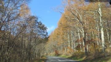 「美し森」の風