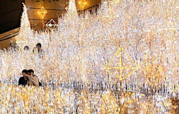 オレンジ色と白色の電球が彩るイルミネーション「煌めく草原」=大阪市中央区のなんばパークス