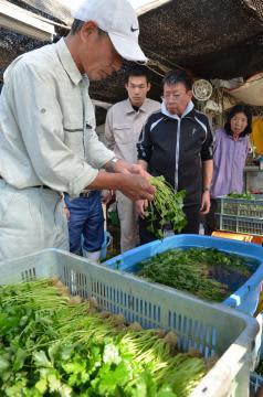 農福連携の研修会で、出荷前のミツバの調整を学ぶ参加者=水戸市内原町