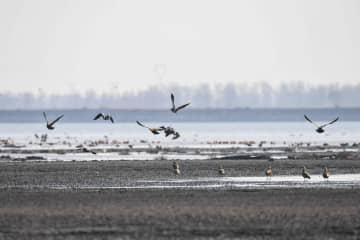 海流ダムに渡り鳥が飛来 内モンゴル自治区