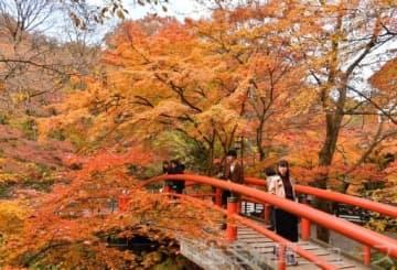 太鼓橋彩る鮮やかな紅葉 伊香保温泉の河鹿橋周辺で見頃迎える