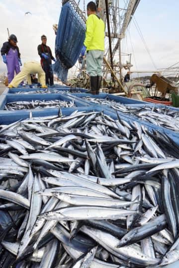 후쿠시마 오나하마항, 꽁치 첫 어획