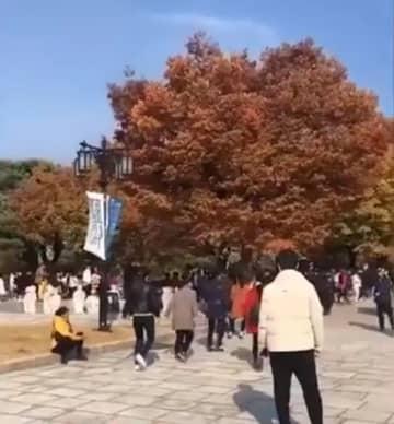 韓国に行ってまで!中国のおばちゃん軍団が踊る