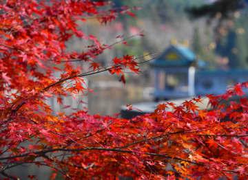 紅葉の季節を楽しむ人々 江西省廬山風景区