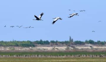 鄱陽湖に大量の渡り鳥が飛来 江西省