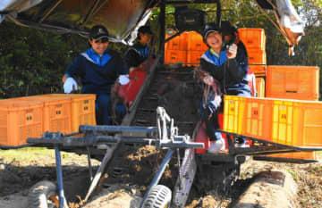 甘藷の収穫体験を行う串間中生たち