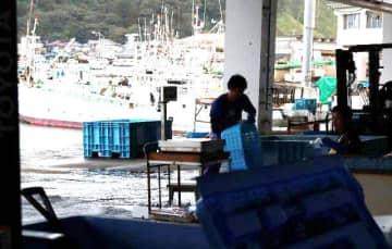 多くの個人漁業者が船を係留する宮崎市の青島漁港。魚価の低迷などで漁業者が減少している=18日午後